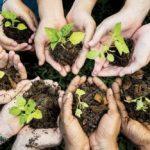 Finados: para homenagear mortos e evitar aglomerações, CNBB sugere plantio de árvores
